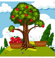 red apple tree in the field vector image