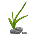 Aloe leaves and zen stones Isolate on white vector image vector image