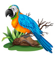 Parrot with blue and yellow feather vector image