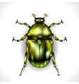 Beetle Isolated vector image vector image