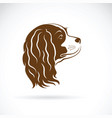 cavalier king charles spaniel dog on white vector image vector image