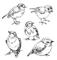 birds set hand drawn cute birds black outlines vector image