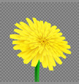 dandelion isolated vector image