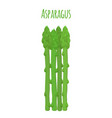 green asparagus butch of ripe asparagus sprout vector image