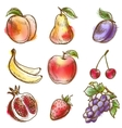 Set of fruits vector image vector image