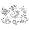 sketches of banana pomegranate and kiwi orange vector image