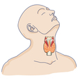 thyroid gland in the human body vector image