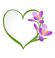 Purple crocus with a frame in the shape of heart vector image