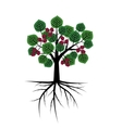 Mulberry abstract tree vector image