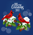 Merry Christmas greeting poster red bird cardinal vector image