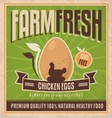 Farm fresh chicken eggs vector image