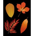 Autumn leaves on black background vector image vector image