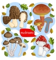 Different types of mushrooms vector image