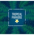 Tropical starry night paradise background template vector image