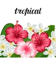 Seamless border with tropical flowers hibiscus and vector image
