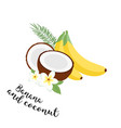 funny fruit set bananas coconuts and leaves set vector image