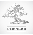 Sketched vintage bonsai tree vector image