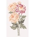 Bouquet of chrysanthemums vector image