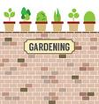 Pot Plants On Brick Wall Gardening Concept vector image
