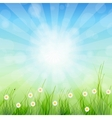 Summer Abstract Background with grass and tulips vector image