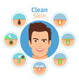 male facial clean skin vector image