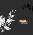 tea template vector image