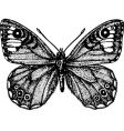 butterfly astride vector image vector image