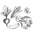 colorless graphic vegetables at random on white vector image