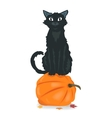 Black cat sitting on Halloween pumpkin vector image