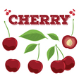 Cherry berries vector image