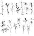 set of ink drawing herbs and flowers vector image