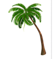 Background with a palm tree vector image vector image