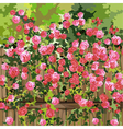 shrub with pink flowers over a fence vector image