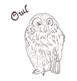 hand drawn of owl vector image