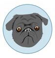 Digital pug dog face in blue circle vector image