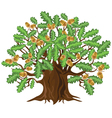 Oak tree with acorns vector image vector image