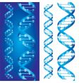Dna chains vector image