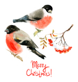 Watercolor bullfinch and ashberry vector image