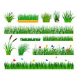 growing grass template for garden vector image