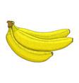 banana hand drawn colored sketch vector image