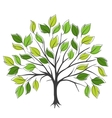 Hand draw abstract green tree vector image vector image