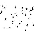 flock of pigeons vector image