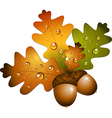 Autumn acorns vector image