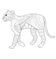 Panther coloring for adults vector image