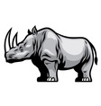 African Rhino vector image