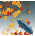 Autumn leaves and umbrella vector image