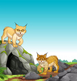 Two tigers living in the cave vector image