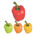 Colored peppers vector image
