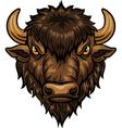Cartoon of head bison mascot vector image vector image
