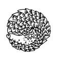 cartoon armadillo animal sleeping vector image